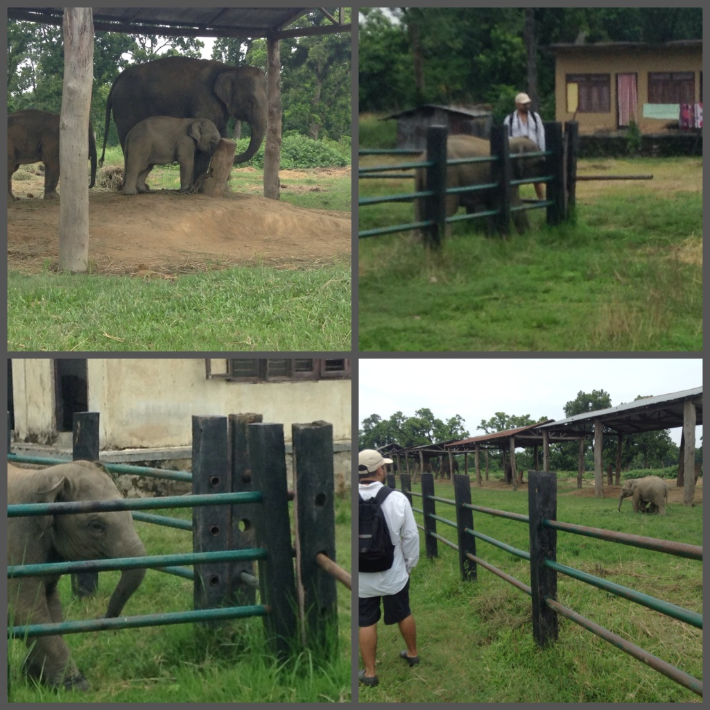 Naweshad bonding with the adorable baby Elephant, spotted getting into trouble as well.