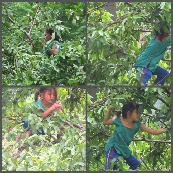 Bhasker captures a girl playing atop a tree. Definitely not a sight we see  AT ALL in the city.