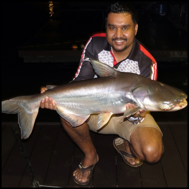 Finally! A Mekong Catfish for Saran!