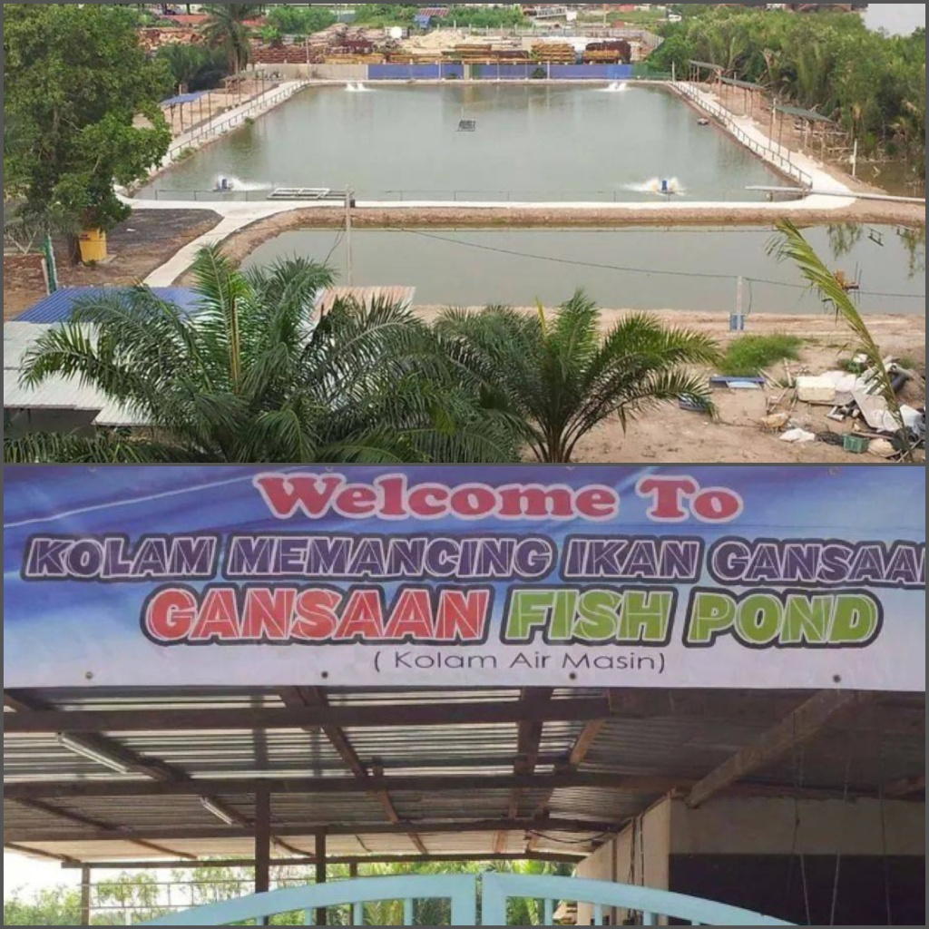 View from the bridge & main entrance of pond. Picture courtesy of Gansaan Fish Pond.