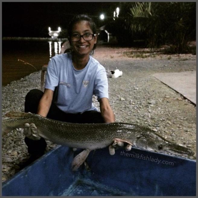My second Alligator Gar