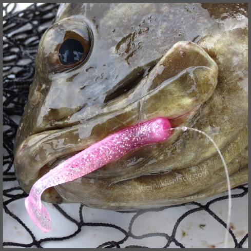 ...and not forgetting the gorgeous Berkley Pink Glow T-Tail. Too sweet to just swim by.
