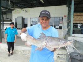 Rizal and one of the many Asian Redtail Catfish he caught and released safely