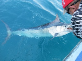 Another stunning Marlin, coming right up!