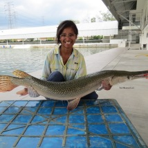 Alligator Gar!