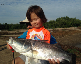 Colin may only be 3 years old but it didn't stop him from landing the largest Barramundi of the day!